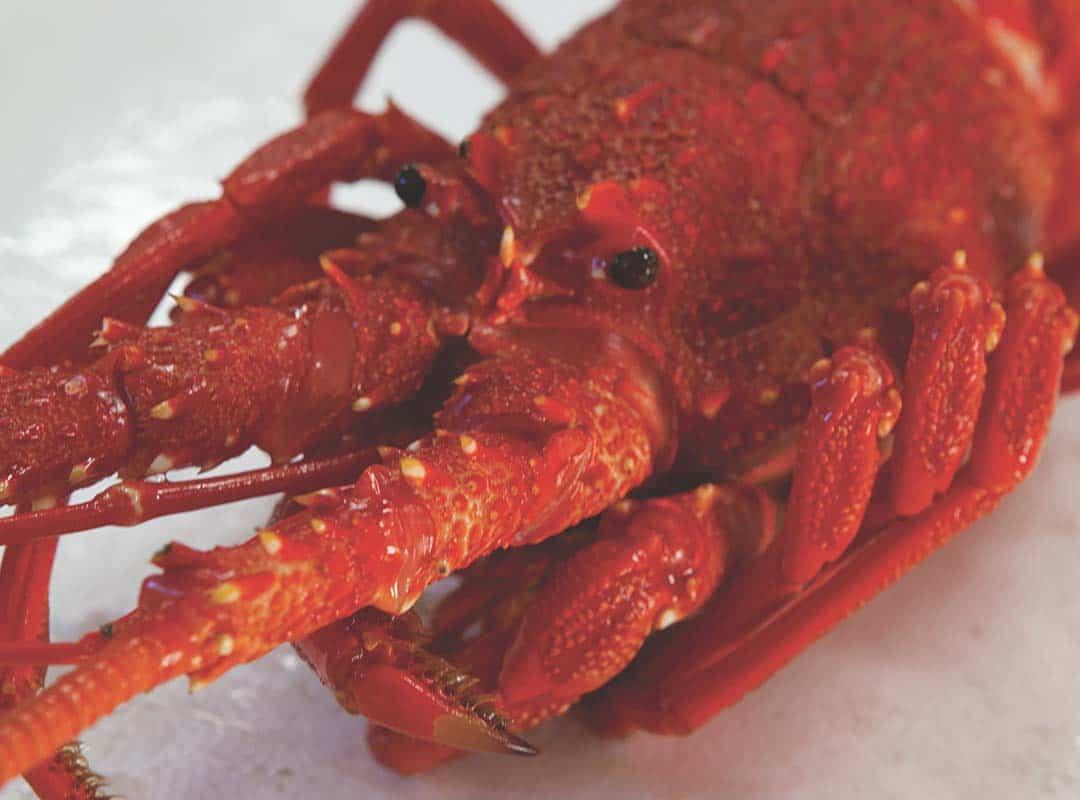 crustaceans-2
