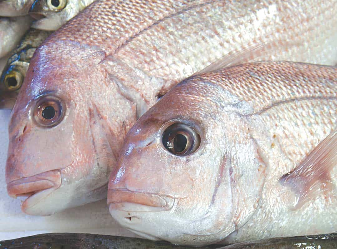 fish-fillet-6