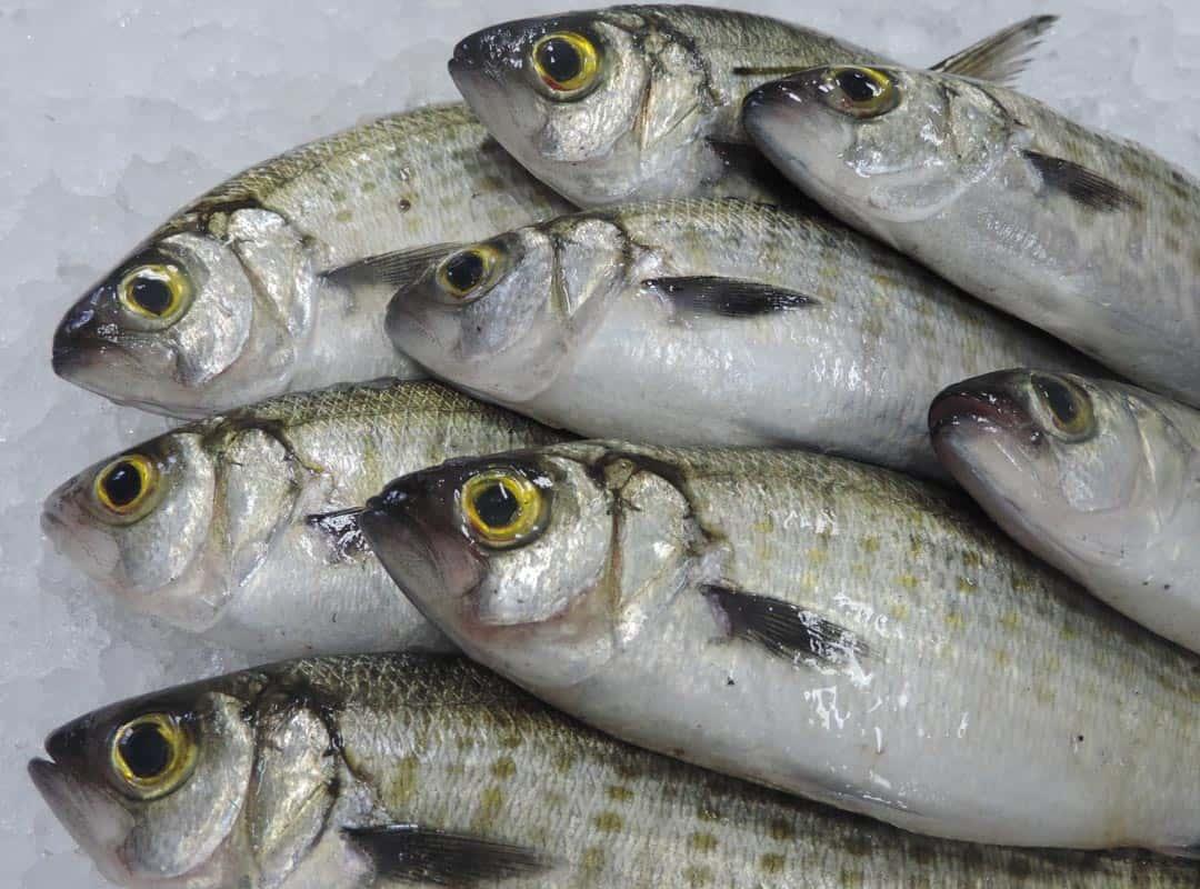 whole-fish-1